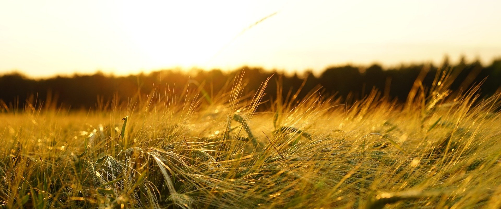 AsPerA - Associazione Periti Agrari